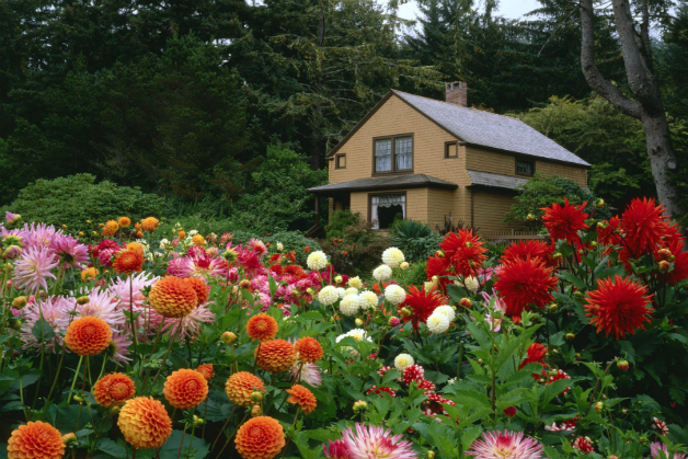 4 Steps To Create Beautiful Butterfly Garden