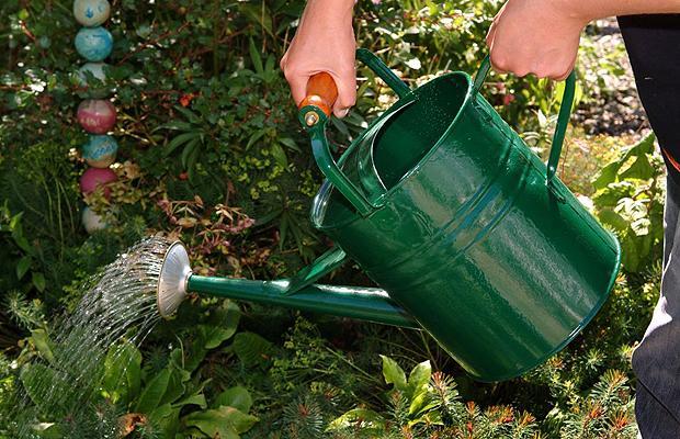 Top 10 Tips For Designing Your Indoor Garden